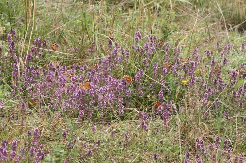 Blütenreiche Wildwiese - Teil 1: Vorüberlegungen