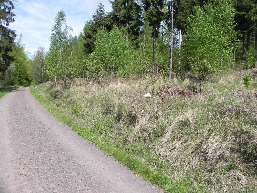 Diskussion: Lichtwaldarten als Teil der regionalen Biodiversitätsstrategie