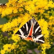 Saarländischer Entomologentag 2017