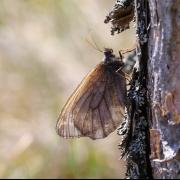Dr. Steffen Caspari: Naturkundlich-entomologische Impressionen aus Lettland
