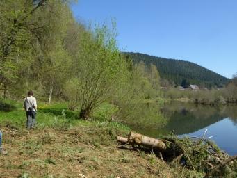 Trauermantel im Schwarzwald 10.04.2017