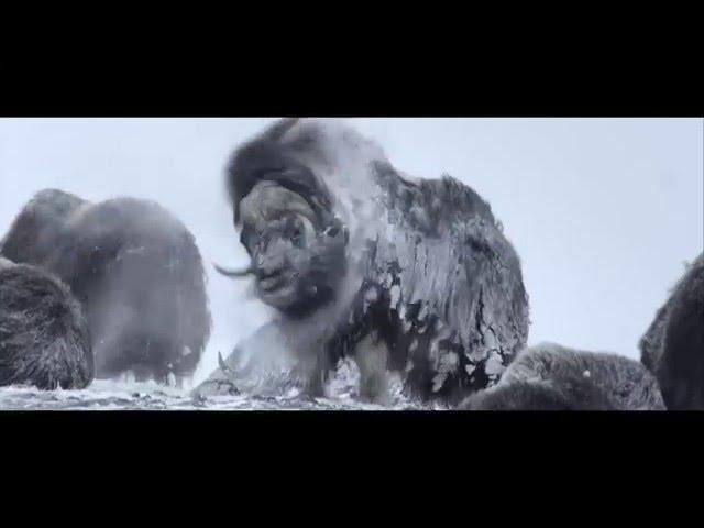 Unsere Wildnis - Trailer (deutsch/german)
