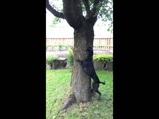 Dog and Squirrel Play Chase Around a Tree