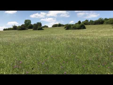 Blühende Landschaft - Eindruck vom Gebberg bei Fechingen